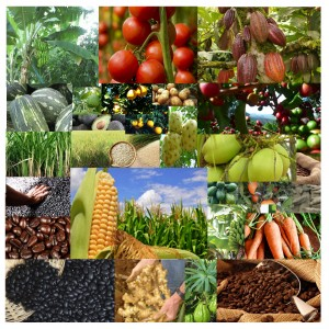 SortisomniS Organic food production